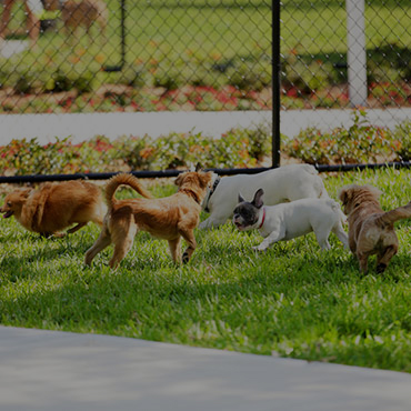 Large Dog Park at Riverwalk Apartments